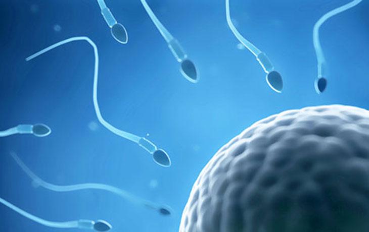 Spermien auf dem Weg zur Eizelle.
